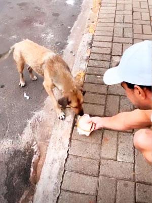 Resultado de imagem para Zezé Di Camargo e Graciele Lacerda ajudam cachorro de rua no Paraná